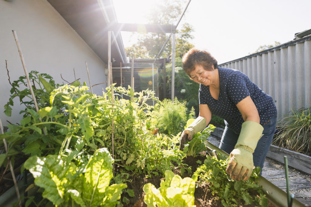 Woman gardening vegetables at her home.